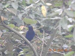 Bird watching @ Club Mahindra Madikeri