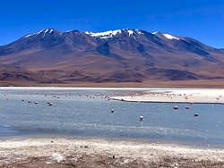 ¡Unboliviable! - the stunning Bolvian landscape & pink flamingos