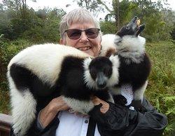 Experiencing Lemurs