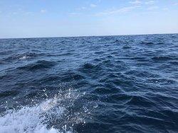 非常多海豚!