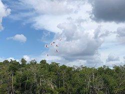 Everglades Florida Adventures