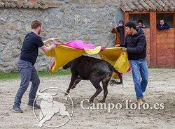 Tour Bull running Madrid