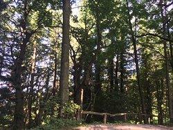 Il bosco sulla strada verso l'agriturismo