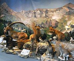 À la rencontre des animaux alpins