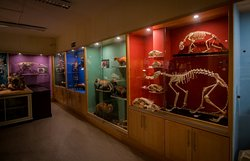 ‪TCD Zoological Museum‬