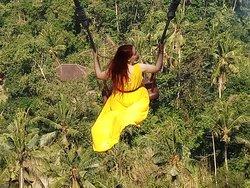 Jalak Bali Tour