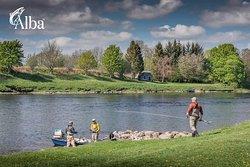 Alba Game Fishing