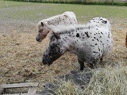 Farmin eläimiä katsomassa