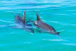 Wild Dolphin Adventures