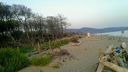La spiaggia selvatica e pineta