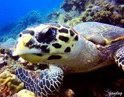 Amed Dive Center
