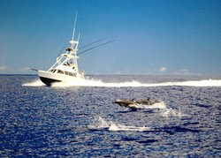 Live Bait Sport Fishing