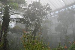 Botanica 1
