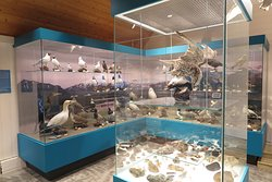 Interesting history of local wildlife history