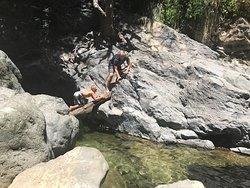 tree bridge to waterfall
