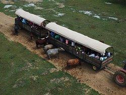 Ariel view of our Safari Wagon Tour