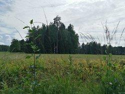 Роскошный парк в Павловске. Есть прокат велосипед, лодочная станция. Много лавочкек, встречаются киоски с перекусом.