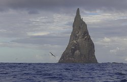 The home of the Lord Howe Island stick insect