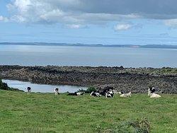 Near Kirkcudbright