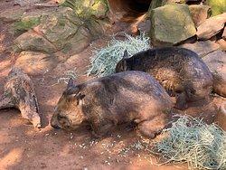 一個比Taronga Zoo更好的動物園