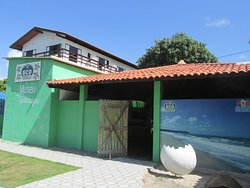 Museu das Tartarugas - ONG Ecoassociados