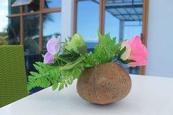 Coconut Display