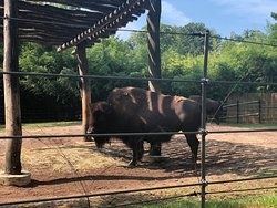 Lovely experience for the kids and adults alike. Can't come here on a rush as there are so many things to learn about these animals and explore the park. Be sure to bring your best walking shoes, a hat, and reusable water bottle on hot summer days.