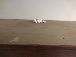 Tissue on top of our wardrobe - dread to think what's on it!