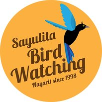 Sayulita Bird watching
