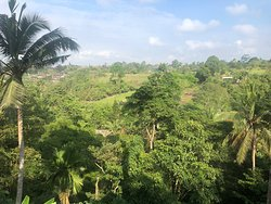 Views from our room at Ubud's Prashanti