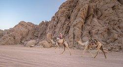 Desert Safari riding camels