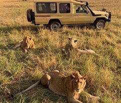 in serengeti National Park