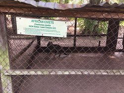 """LUFASI(Lekki Urban Forest and Animal Sanctuary Initiative) is a privately owned nature park by Desmond Majekodunmi and an NGO dedicated as an urban hub where people can connect to and with nature in Lagos, Nigeria. It houses Ekki """"iron wood"""" tree of over 150 years, an African spurred tortoise of over 100 years, West African dwarf sheep, Nigerian dwarf goat, Dutch rabbits, ever green trees, birds, Ekki forest, plants and more.  It's a safe place to have a memorable time alone or with loved ones."""