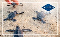 Be part of this awesome experience with our Sunset Turtle Release Activity, book yours now!