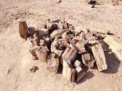 Petrified Forest in Twyfelfontein