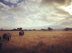 More walking with elephants