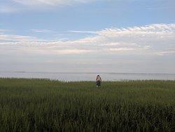 Marsh beach