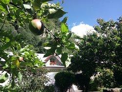 Our Organics Garden