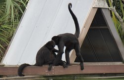 Some of the fun monkeys to see.
