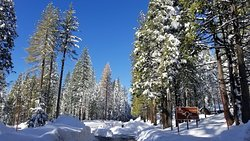 The Redwoods In Yosemite is open year round!