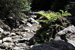 Salto do Cabrito - cesta k vodopádu