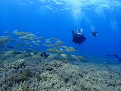 Adabanko Reef. Reef starts at 5 meters and goes to 40 meters. All level of divers can dive to Adabanko Reef.
