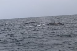 Whales and...