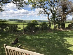 Views from our lovely dog paddock