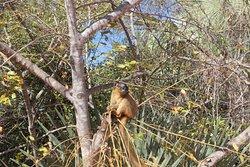 Phare de Katspy Forêt avec Lemur fulvus et Baobabs dans la forêt