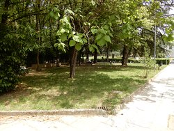 Grassed area with benches