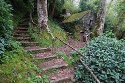Plantacoes de Cha Gorreana -  stezka Caminho da Agua da Gorreana