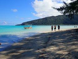 Te Mara Nui Plongee