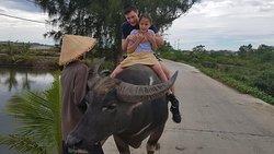 Da Nang Hoi An Hue Private Tours -  ANDY TOURS