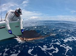 Robert & Nancy from the Seattle went 5 for 6 on Sailfish & lost a Marlin during their first day of their honeymoon fishing in Costa Rica aboard GOOD DAY.    Robert was Super unlucky to lose a nice Marlin during the first 10 minutes of the day.   Heading back out there right now with Robert & Nancy in search of some Tuna!